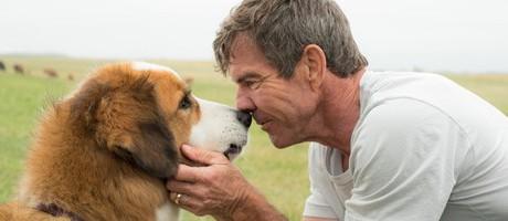 Жизнь собаки