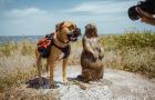 На Одещині знімають дитячий проєкт про рідкісних тварин дельти Дунаю