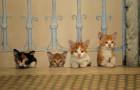 «Королівство котів»: гарне сімейне кіно стартує 21 грудня