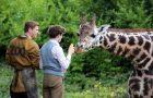 Сімейний фільм «Зоопарк» виходить у прокат