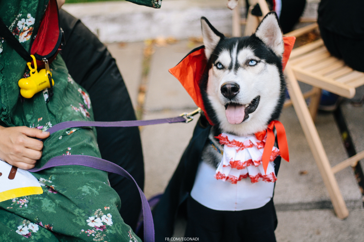 comic con украина собаки