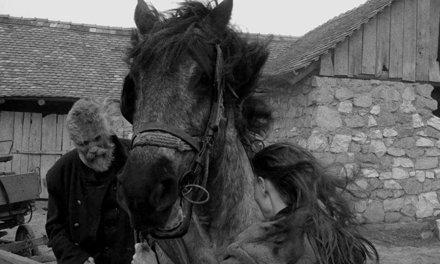 Туринський кінь / A torinói ló